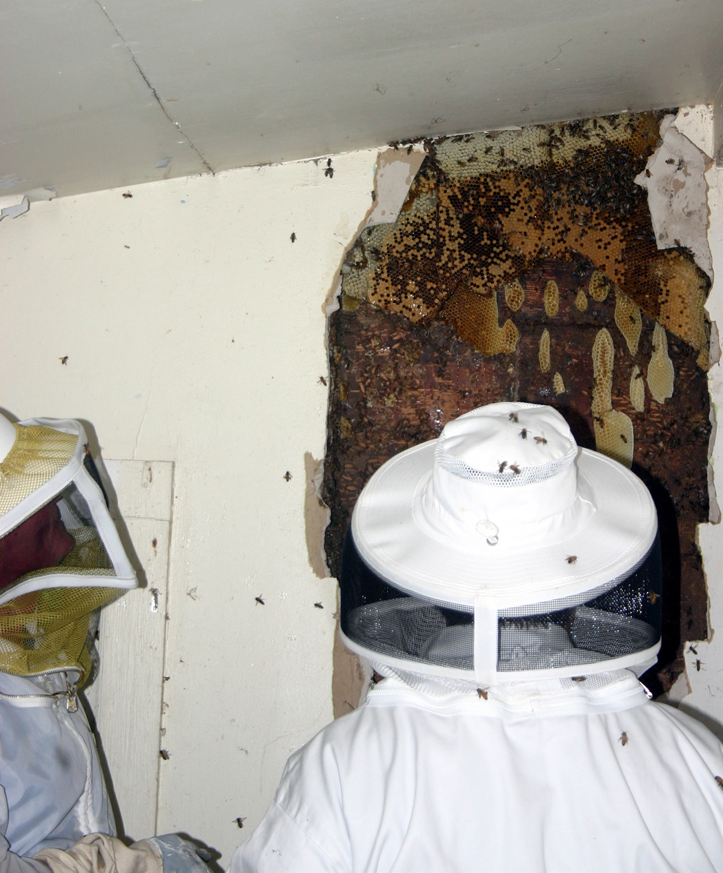 6-Honey Bee hive to Ceiling